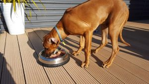Beginners Guide to Raw Feeding Dogs/Puppies