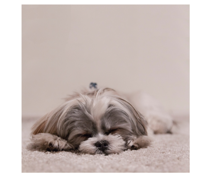 Anxiety Aromatherapy Blend for Dogs